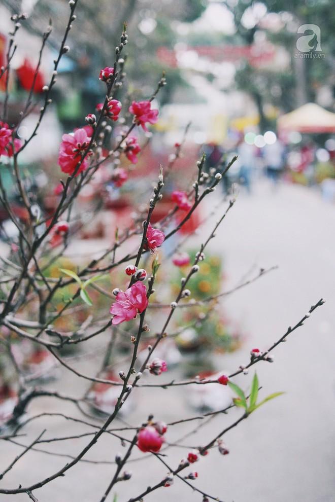 6 loại hoa cổ truyền chưa bao giờ hết hot mỗi độ Tết đến, xuân về - Ảnh 4.