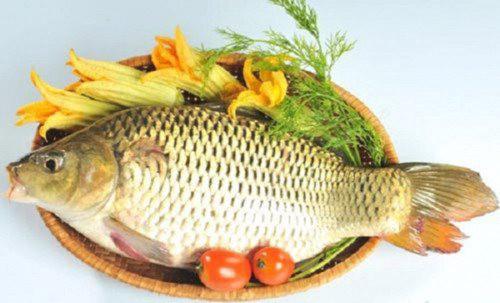 Lợi ích bất ngờ của cá chép với sức khỏe - Ảnh 1.