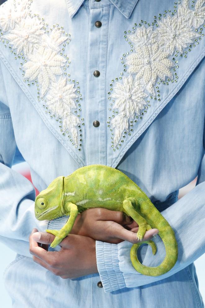 Show mới của Gucci dị quên lối về: Người mẫu ôm... thủ cấp để catwalk, kẻ lại vác nguyên con rồng - Ảnh 18.