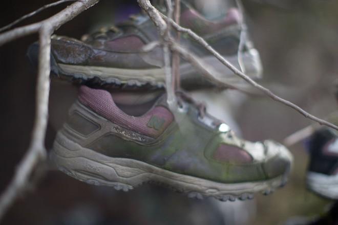 Khu rừng bí ẩn ở Canada: Hàng trăm đôi sneakers bị đóng đinh lên cây, không ai biết lý do vì sao - Ảnh 1.