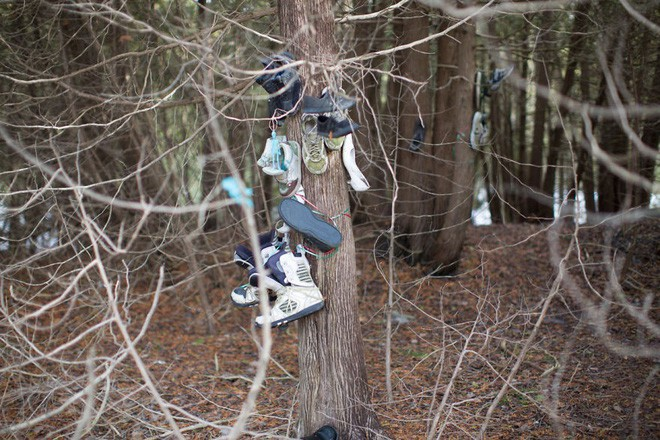 Khu rừng bí ẩn ở Canada: Hàng trăm đôi sneakers bị đóng đinh lên cây, không ai biết lý do vì sao - Ảnh 12.