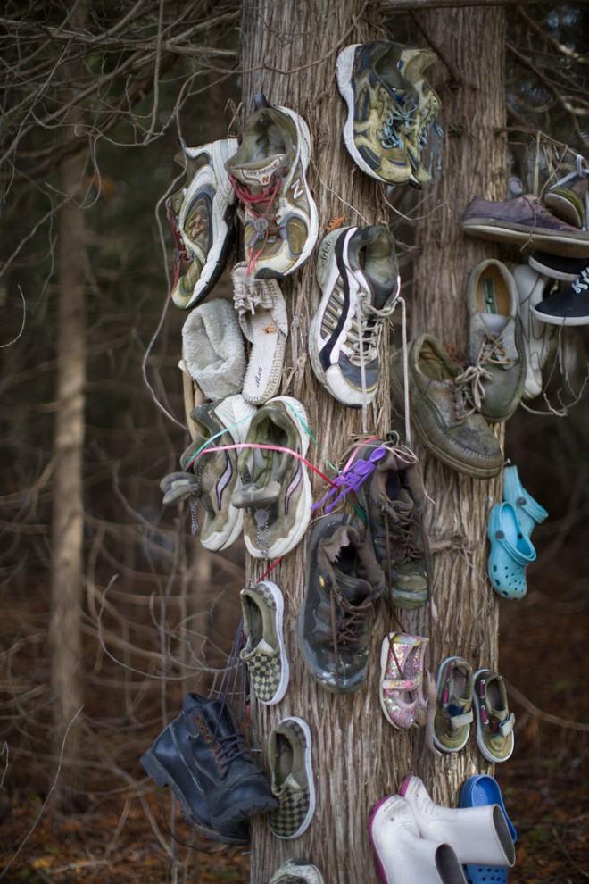 Khu rừng bí ẩn ở Canada: Hàng trăm đôi sneakers bị đóng đinh lên cây, không ai biết lý do vì sao - Ảnh 15.
