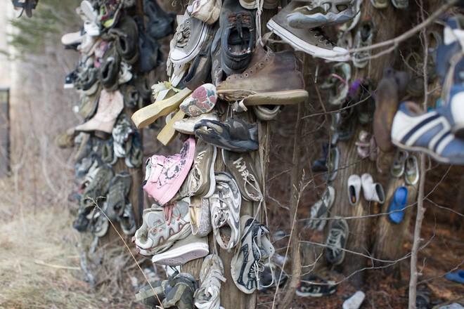 Khu rừng bí ẩn ở Canada: Hàng trăm đôi sneakers bị đóng đinh lên cây, không ai biết lý do vì sao - Ảnh 23.