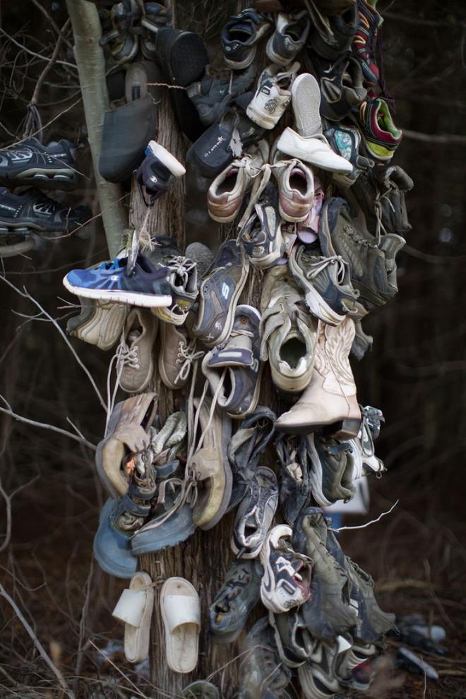 Khu rừng bí ẩn ở Canada: Hàng trăm đôi sneakers bị đóng đinh lên cây, không ai biết lý do vì sao - Ảnh 28.