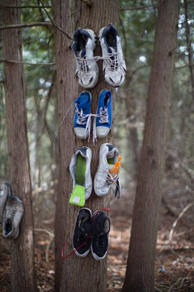 Khu rừng bí ẩn ở Canada: Hàng trăm đôi sneakers bị đóng đinh lên cây, không ai biết lý do vì sao - Ảnh 4.