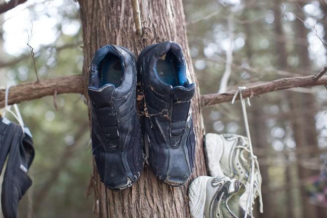 Khu rừng bí ẩn ở Canada: Hàng trăm đôi sneakers bị đóng đinh lên cây, không ai biết lý do vì sao - Ảnh 5.