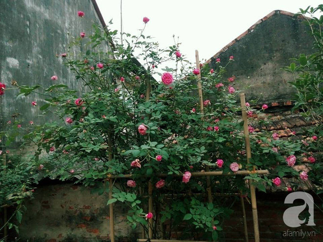 Ngôi nhà hoa hồng đẹp như thơ ở Hưng Yên của ông bố đơn thân quyết phá sân bê tông để thực hiện ước mơ - Ảnh 18.