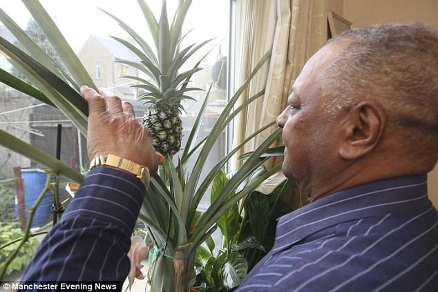 Người đàn ông bỏ ngọn quả dứa bên cửa sổ nhà mình, thời gian sau ông nhận được kết quả ngoài sức tưởng tượng - Ảnh 2.