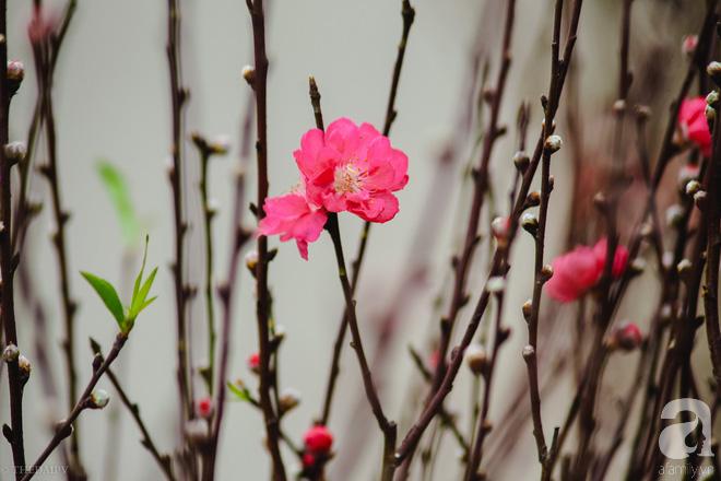 Hoa đào như những áng mây xa, nhuộm hồng từng khoảng trời Hà Nội - Ảnh 10.