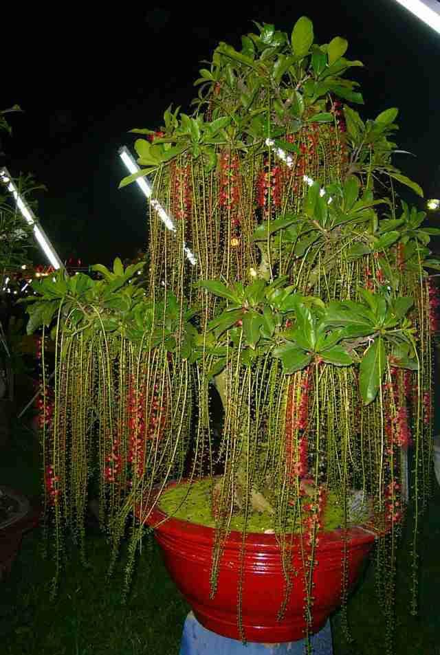 Cách trồng cây phong thủy trong vườn hút tài lộc - Ảnh 2.