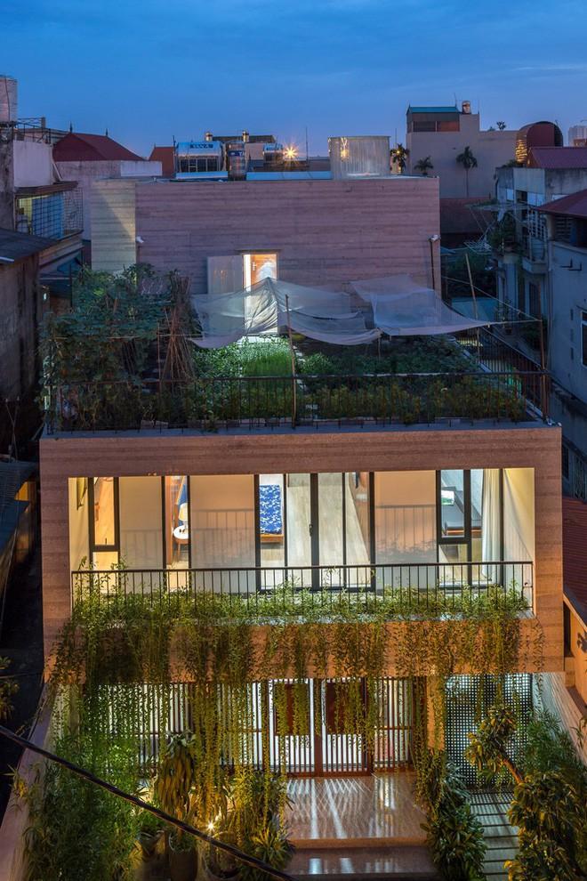 Ngôi nhà nhìn đâu cũng thấy cây xanh và có hẳn một vườn rau trên sân thượng cực rộng ở Hà Nội - Ảnh 1.