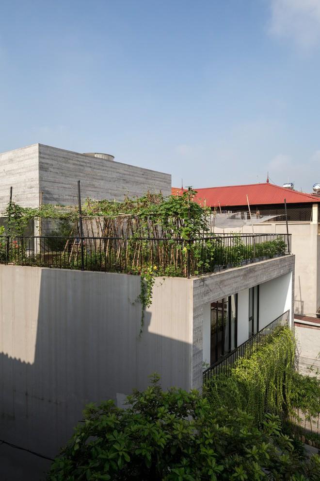 Ngôi nhà nhìn đâu cũng thấy cây xanh và có hẳn một vườn rau trên sân thượng cực rộng ở Hà Nội - Ảnh 21.