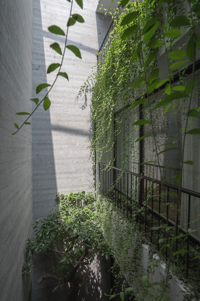 Ngôi nhà nhìn đâu cũng thấy cây xanh và có hẳn một vườn rau trên sân thượng cực rộng ở Hà Nội - Ảnh 17.