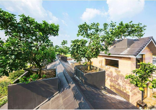 Ngôi nhà không đổ cột bê tông với vườn bưởi trĩu quả trên mái nhà ở Hà Nội - Ảnh 5.