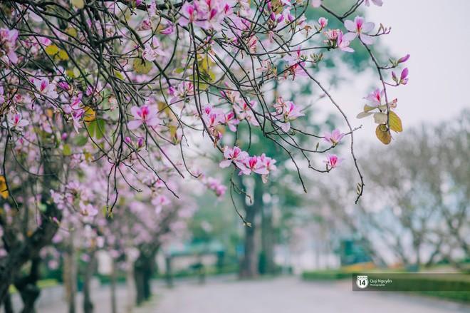 Cứ thấy 4 loài hoa này xuất hiện thì biết ngay tháng 3 đã về rồi - Ảnh 7.