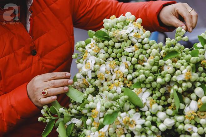 Xao xuyến và êm dịu những sắc hoa tháng 3 Hà Nội - Ảnh 1.