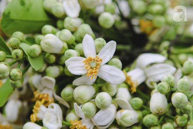Xao xuyến và êm dịu những sắc hoa tháng 3 Hà Nội - Ảnh 2.
