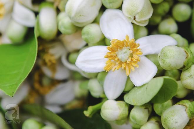 Xao xuyến và êm dịu những sắc hoa tháng 3 Hà Nội - Ảnh 3.