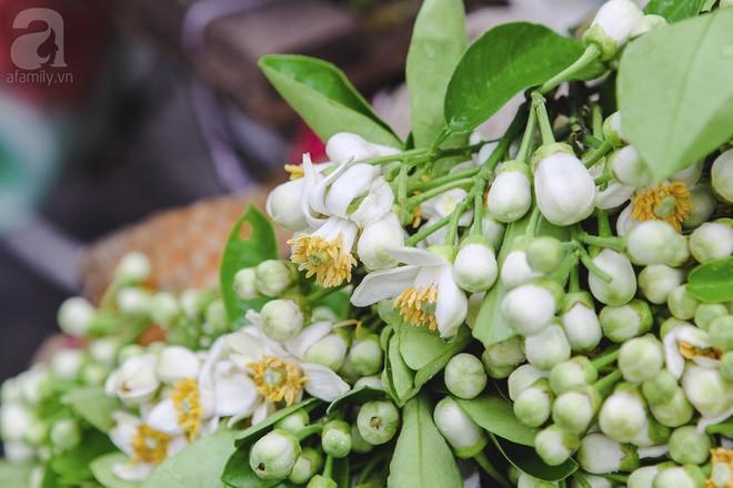 Xao xuyến và êm dịu những sắc hoa tháng 3 Hà Nội - Ảnh 9.