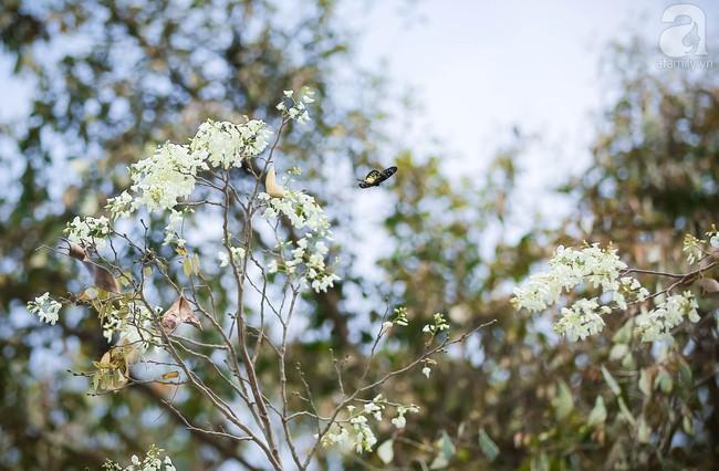 Cứ thấy 4 loài hoa này xuất hiện thì biết ngay tháng 3 đã về rồi - Ảnh 5.