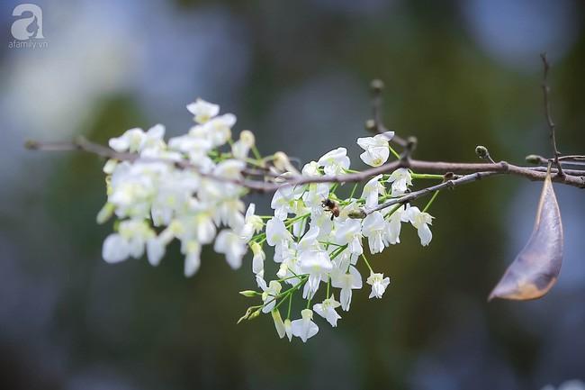 Xao xuyến và êm dịu những sắc hoa tháng 3 Hà Nội - Ảnh 13.