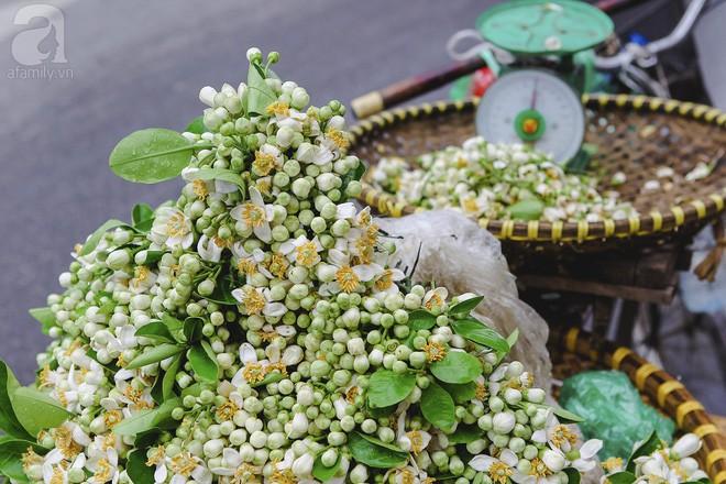 Xao xuyến và êm dịu những sắc hoa tháng 3 Hà Nội - Ảnh 4.