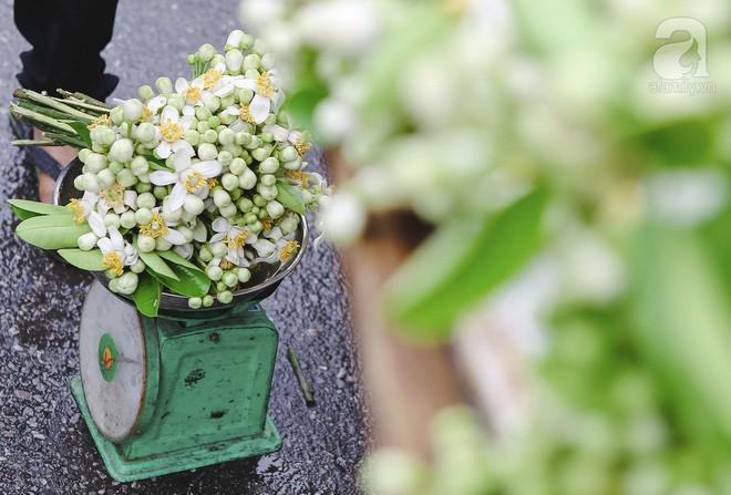 Xao xuyến và êm dịu những sắc hoa tháng 3 Hà Nội - Ảnh 5.