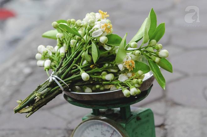Xao xuyến và êm dịu những sắc hoa tháng 3 Hà Nội - Ảnh 6.