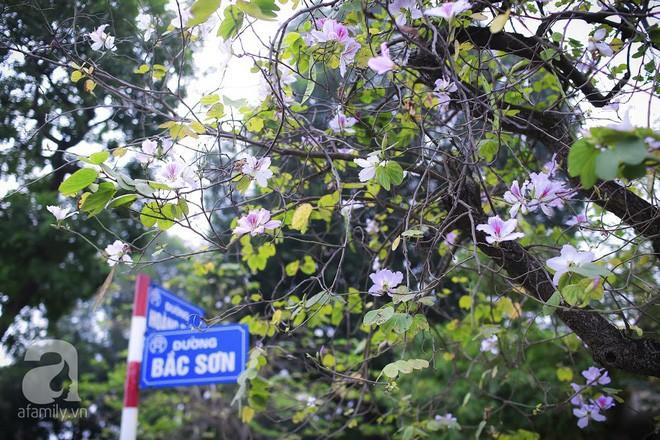 Xao xuyến và êm dịu những sắc hoa tháng 3 Hà Nội - Ảnh 19.