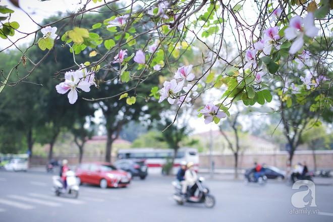 Xao xuyến và êm dịu những sắc hoa tháng 3 Hà Nội - Ảnh 20.