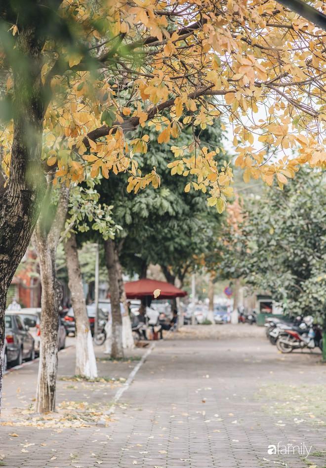'. Đây là Hà Nội những ngày lá vàng lá đỏ, đẹp cứ ngỡ mùa thu xứ Hàn .'