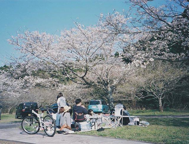 3 lễ hội được trông đợi nhất vào dịp tháng 4 ở châu Á - Ảnh 6.