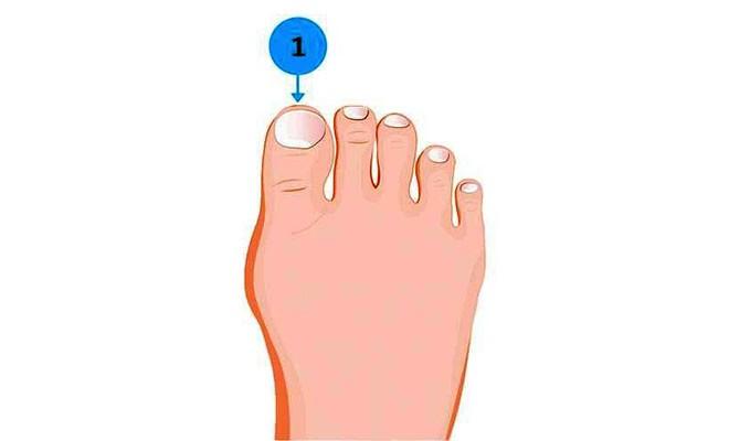 Soi ngay kích cỡ ngón chân để khám phá nhiều bí mật thú vị về tính cách của bản thân - Ảnh 1.
