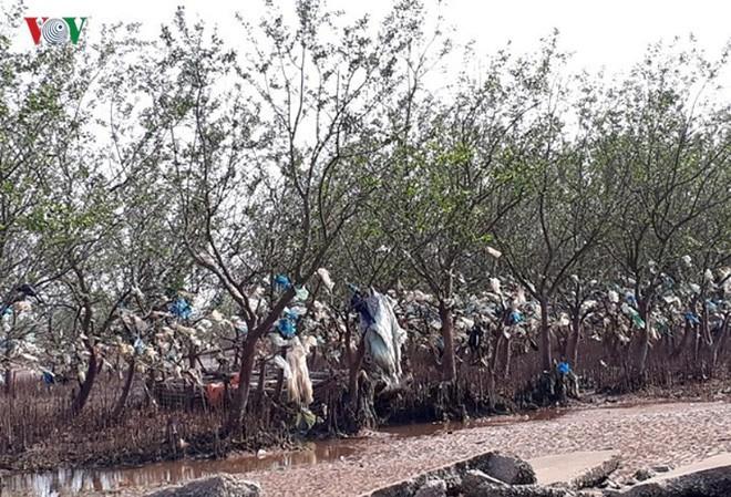 Ảnh: Kinh hoàng rừng cây treo đầy rác ở Thanh Hóa - Ảnh 1.