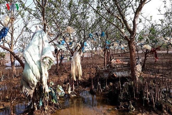 Ảnh: Kinh hoàng rừng cây treo đầy rác ở Thanh Hóa - Ảnh 2.