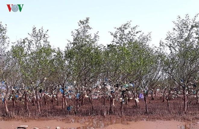 Ảnh: Kinh hoàng rừng cây treo đầy rác ở Thanh Hóa - Ảnh 6.