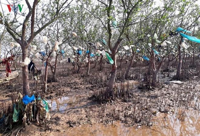 Ảnh: Kinh hoàng rừng cây treo đầy rác ở Thanh Hóa - Ảnh 7.