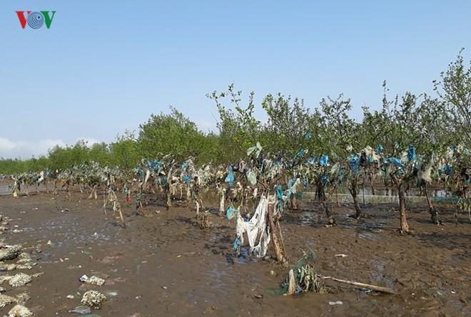 Ảnh: Kinh hoàng rừng cây treo đầy rác ở Thanh Hóa - Ảnh 9.