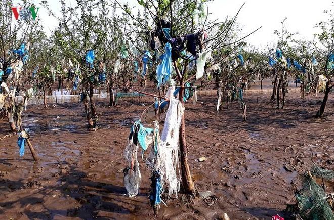 Ảnh: Kinh hoàng rừng cây treo đầy rác ở Thanh Hóa - Ảnh 10.