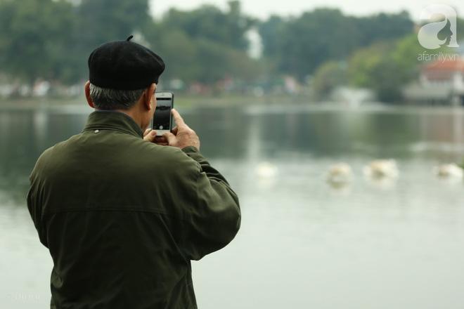 Thông tin về một cá thể thiên nga đen tại hồ Thiền Quang bị mất tích nhiều ngày qua - ảnh 3