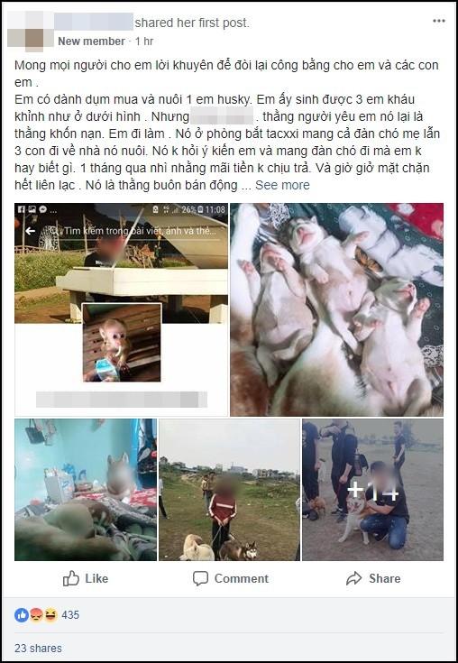 Vừa quen được 1 tháng, cô gái đã bị bạn trai bắt trộm cả 4 chú chó cưng Husky, nhắn tin đòi thì bị dọa tung clip nóng - Ảnh 1.