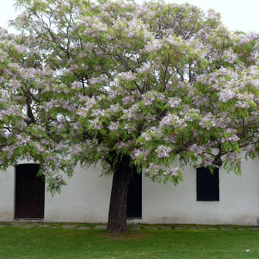 Trồng cây trước cửa nhà là điều cấm kị trong phong thủy nhưng có thể hóa giải bằng cách sau - Ảnh 4.