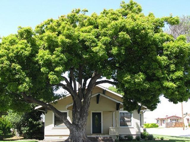 Trồng cây mà không tuân theo 4 nguyên tắc phong thủy này thì may mắn và tài vận của gia đình bị ảnh hưởng nghiêm trọng - Ảnh 3.