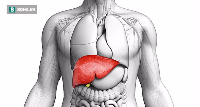 3 phương pháp giải độc dành cho người lười nhất: Vừa làm sạch gan phổi, vừa chăm sóc thận  - Ảnh 1.