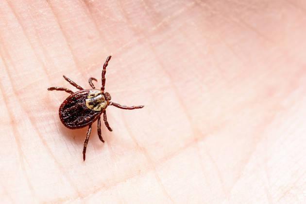 Chuyên gia cảnh báo sự bùng nổ của một loài bọ gây bệnh nguy hại cho trẻ trong mùa hè  - Ảnh 1.