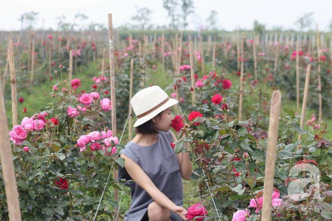 Ngắm khu vườn hoa hồng rộng đến 3 ha đẹp ngất ngây đã giúp cô gái 27 tuổi thoát khỏi bệnh trầm cảm ở Hà Nội - Ảnh 1.