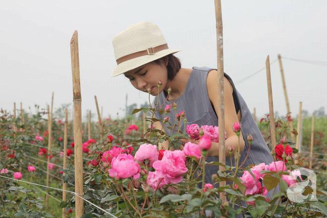 Ngắm khu vườn hoa hồng rộng đến 3 ha đẹp ngất ngây đã giúp cô gái 27 tuổi thoát khỏi bệnh trầm cảm ở Hà Nội - Ảnh 2.