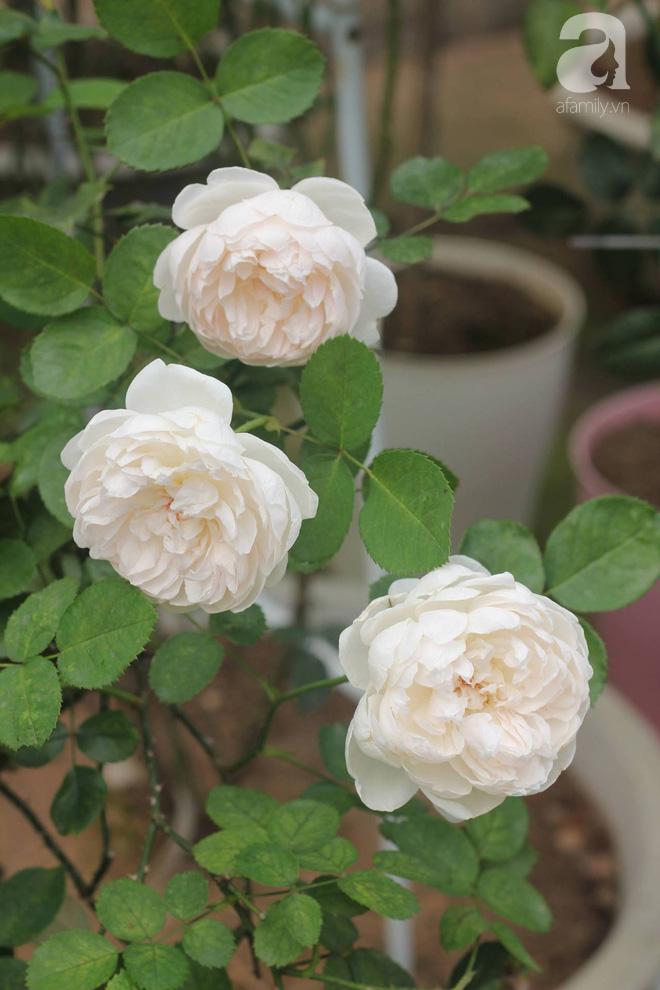 Ngắm khu vườn hoa hồng rộng đến 3 ha đẹp ngất ngây đã giúp cô gái 27 tuổi thoát khỏi bệnh trầm cảm ở Hà Nội - Ảnh 4.