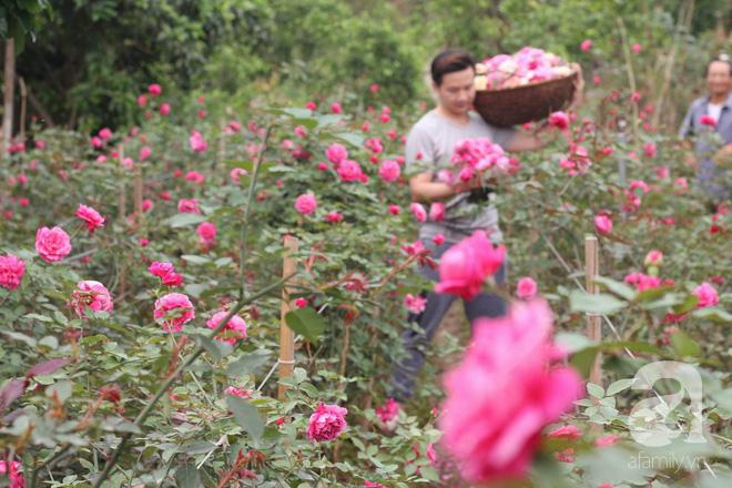 Ngắm khu vườn hoa hồng rộng đến 3 ha đẹp ngất ngây đã giúp cô gái 27 tuổi thoát khỏi bệnh trầm cảm ở Hà Nội - Ảnh 5.