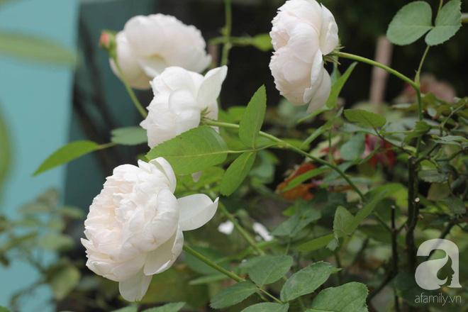 Ngắm khu vườn hoa hồng rộng đến 3 ha đẹp ngất ngây đã giúp cô gái 27 tuổi thoát khỏi bệnh trầm cảm ở Hà Nội - Ảnh 8.